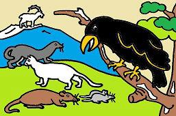 Vrana a ďalšie zvieratká