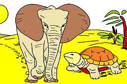 Slonica a korytnačka