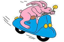 Zajac na motorke