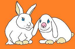 Domáce králiky