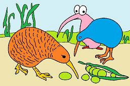 Vtáky kiwi