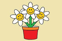 Krásne chryzantémy