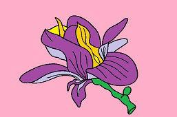 Kvet magnólie