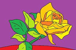 Biela ružička