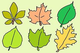 Listy stromov