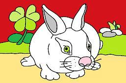 Biely zajac