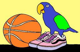 Papagáj v teniskách