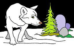 Vlk v zime