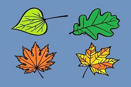 Poznáš listy stromov?