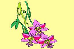Kvet orchidey